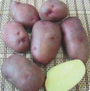 Картофель Розара .Оптом.