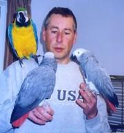 Очаровательны африканского серый попугай готова к хорошей дома