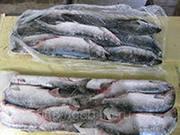 Продаём оптом рыбу замороженную