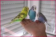 Прямые поставки в зоомагазины оптом экзотических птиц Крыма