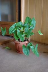 Продаю растения в г. Владивосток