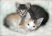 Отдадим прелестных котят в добрые руки!