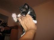Отдам в хорошие руки симпатичных котят
